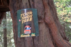 In case you wonder which tree...it's clearly marked.